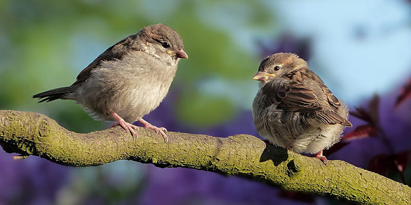 two sparrows chatting away on a tree branch